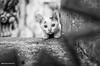 Istanbul Street Kitten (Dean Harte - www.deanharte.com) Tags: cat kitten streetcat kedi istanbul