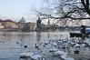 Tschechien Prag_DSC0467A (reinhard_srb) Tags: tschechien prag altstadt weltstadt hauptstadte moldau karlsbrücke wasser schäne enten ufer promendae abend winter baum wellen fluss