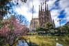 sagrada familia cathedral park view (Aaron_Choi) Tags: landscape architecturaldetail architecturaldetails architecture barcelona basilica beauty catalan catalonia cathedral catholic catholicism churchoftheholyfamily destination espana europe european expiatorychurch famous flower garden gaudi lake landmark nature park peaceful placadegaudi pond reflections religion religious romancatholic sagradafamilia scenic smallpark spain spanish spring tourism travel trees unesco unescoworldheritagesite view viewpoint water