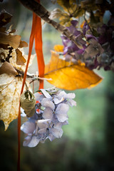 My Autumn Wreath (judy dean) Tags: 2018 flowers judydean arty wreath autumn preserved hydrangea ribbon