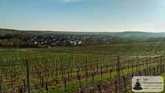 Blick auf Stadecken: Weinwanderung mit Stefan Braunewell nach Essenheim, Vinocamp Rheinhessen 2018
