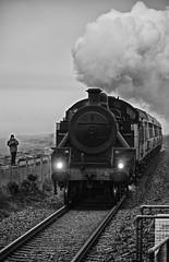 Steam Train (OgniP) Tags: