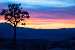 At the Start of the Day (hippyczich) Tags: sunrise bryce canyon utah america tree silhouette