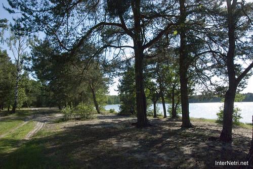 Шацький Національний Природний Парк Озеро Пісочне Сосни InterNetri  Ukraine 362