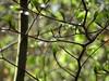 DSC00197 Frühling - spring (baerli08ww) Tags: deutschland germany rheinlandpfalz rhinelandpalatinate westerwald westerforest wald forest wassertropfen waterdrops spring springcolors natur