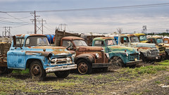 Hanging with the Guys (PNW-Photography) Tags: rusty dusty old rust dust vintage classic american internation truck trucks hermiston oregon abandoned lost found explored explore derelict sony a6000 sonya6000 takumar 50mm smctakumar50mmf14