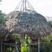 Embera hut under construction