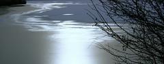 Münchner Winter (sylvia-münchen) Tags: münchen te natur kälte winter kunst day cold schnee eis ice germany europe glanz sonnig äste eisfläche garchinger see stille polliert glänzend schimmer