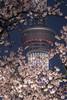 Found (Majime-SPN) Tags: travelphoto travelphotography nikon japan japanese traveljapan japanesetravelphotography youtubeseries youtube youtubephotography nikondslr nikond5500 nikoncamera dslr ニコンdslr ニコンd5000 日本 自然 nature naturephotography japanesenature