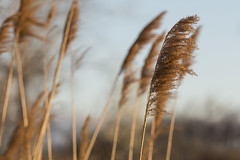 Air Brush (sullivan1985) Tags: meadowlands meadows newjersey northjersey marsh swamp phragmites hudsoncounty kearny nj