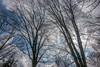 DSC00166 (johnjmurphyiii) Tags: 06416 clouds connecticut cromwell originalarw shelly sky sonyrx100m5 spring usa yard johnjmurphyiii