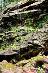 bigsouthfork_3829 (jcbonbon) Tags: april big south fork tennessee park spring waterfall