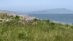 Walking Sunday (Melinda Stuart) Tags: bay berkeley park trail chavez waterfront marin composition wildflowers sailboat marine berkeleyside