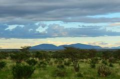 Самбуру (Oleg Nomad) Tags: африка кения самбуру сафари животные млекопитающие природа africa kenya samburu nature animals safari mammals travel