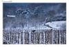 L'épreuve du poteau... (jamesreed68) Tags: corneille corbeau volatile oiseau animal nature vigne alsace hiver grandestwuenheim 68 hautrhin canon eos 600d