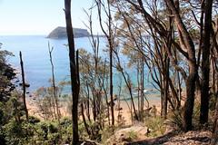 West Head Beach (destinationsjourney) Tags: kuringgaichasenationalpark australia sydney newsouthwales nature tree trees new south wales aboriginalheritagewalk aboriginal heritage walk beach sand sea ocean waves bushwalk bush path