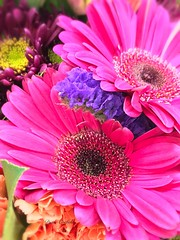 Pink and Purple Flowers   💞💜 💐🌸🌸 (dianecorfield) Tags: smellsbeautifulprettypetalsbouquet daisiesflowerscolours coth alittlebeauty thesunshinegroup coth5