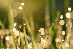Waking Up (Ellen van den Doel) Tags: grass bokeh zonsopkomst belgie netherlands voorjaar water nederland drop 2016 early light nature druppel outdoor zonsopgang macro limburg closeup gras licht sunrise lente fotoweekend fotoclub natuur weekend april plombières régionwallonne belgië be