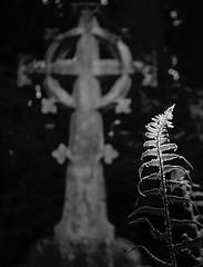 Topic 12 for 52 in 2018 Ancient (colin.smith18) Tags: fern grave gravestone graveyard burnside burnside35