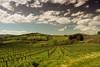 Tuscan's vineyards (wolian1979) Tags: tuscany toscana toskania wine vino wino vineyard hills colline sky clouds nuvole cielo paesaggio nature primavera spring