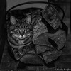 Bûches - Log (Nicolas Rouffiac) Tags: bûche bûches log logs cat cats chat chats pet animal animals animaux fun funny drôle monochrome