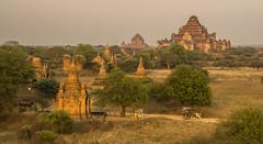 bagan sunset (cih94) Tags: bagan temple ပုဂံ pagan ancient city pagodas myanmar burmese burma buddhism buildings monastery sun yellow plain valley sunset