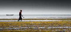 Bird & the Boat (Beppe Rijs) Tags: africa afrka insel island sansibar tansania tanzania dusk sundown sun light people fisherman zanzibar sea color seafood crustacean lowtide