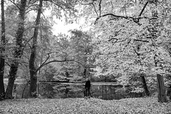When I miss you (gambajo) Tags: 1year1town1lens brühl blackandwhite blackwhite black white trees leafs fall autumn park nature schlosspark human people woman water pond lake reflection lonely alone moody melancholic see walk frau person public outdoors wasser