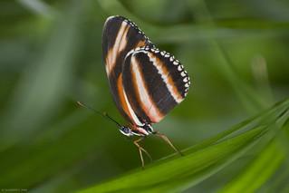 Butterfly 2018-38