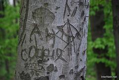 Ботанічний сад імені Гришка Буковий гай InterNetri  Ukraine 114
