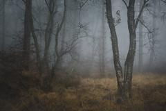 Outsiders (www.neilburnell.com) Tags: rees landscape mood moody atmosphere mist fog misty foggy neil burnell wwwneilburnellcom tree sky grass ngc