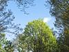 North Block Trees (Orbmiser) Tags: kfconceptlensmountadapternikonglenstomicro43 nikkor28105mmf3545d nikonlens omdem1 manual olympus oregon portland m43rds trees northparkblocks landscape
