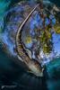 Godzilla (hk.underwater) Tags: freshwater usa underwater reptiles alligatorsandcaimansalligatoridae americanalligatoralligatormississippiensis animals florida evergladesoutpost diving scubadiving tauchen unitedstatesofamerica