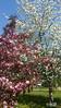Die Farben im April 01 (gabimartina) Tags: frühling blüten blumen brandenburg farbe spring