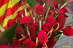 Very good festival of Sant Jordi for all & Molt bona diada de Sant Jordi per a tothom (Domènec Ventosa) Tags: fiesta cataluña patrón rosas flores cultura diada libro libros historia leyenda party catalonia pattern roses flowers culture day book books history legend