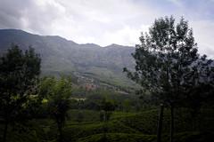 Munnar: Top Station Road (deepgoswami) Tags: india kerala munnar topstation teagarden