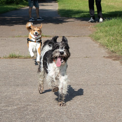 LENNY bei dem es nur den Raketenantrieb gibt konnte kurz einen Freund animieren mit zu fliegen (rentmam1) Tags: dogs hunde lenny