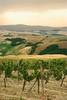 Stock Images (perfectionistreviews) Tags: vines vineyard scenery rural landscape rollinghills hills field winery grapes vertical copyspace color rows country tuscany vacation tourism travel nobody grapevine farming agriculture mountain terraced italy europe grow cultivate scenic countryside openspace outdoors planted viticulture photograph industryandagriculture