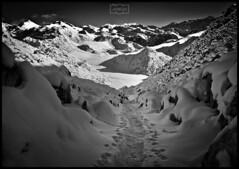 Mundo blanco/ White world (Jose Antonio. 62) Tags: snow nieve white blanco bw blancoynegro blackandwhite camino path