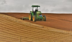 May31Image1318 (Michael T. Morales) Tags: plowing farm furrows tilling marinacalifornia