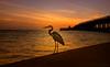 Rêve Coucher de Soleil (JDS Fine Art Photography) Tags: egret heron