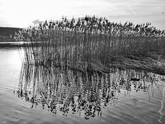 Greifensee (Mauro Morelli) Tags: schweiz greifensee mauromorelli mft m43 lumix kantonzürich 20mmf17 dmcg81