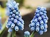 P1030414 copy (douglasjarvis995) Tags: flower macro harlow carr yorkshire garden panasonic g80 close colour nature on1photoraw affinity