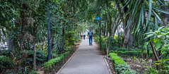 2018 - Mexico City - Av. Amsterdam - Urban Jungle (Ted's photos - Returns 23 Jun) Tags: 2018 cdmx cityofmexico cropped mexico mexicocity nikon nikond750 nikonfx tedmcgrath tedsphotos tedsphotosmexico vignetting park parkscene median backpack people peopleandpaths amsterdam avamsterdamcondesa condesaamsterdam pathway walkway walking walkers wideangle widescreen