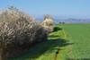Par un beau matin de printemps (Excalibur67) Tags: nikon d750 sigma contemporary 100400f563dgoshsmc paysages landscape ciel sky nature printemps spring campagne