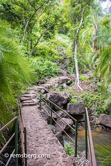 A pathway leads into the tropical, lush vegetation of the Victoria Falls Rainforest. Victoria Falls, Zambia (Remsberg Photos) Tags: victoriafalls zambia africa rainforest tropical forest lush vegetation greenery flourish growth outdoor nature mothernature pathway path livingstone