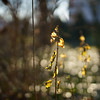 Standing tall at sunset | SONY ⍺7III (.: mike | MKvip Beauty :.) Tags: sony⍺7markiii sony⍺7iii sonyilce7m3 sonyalpha7m3 sonyalpha sony alpha emount ⍺7iii ilce7m3 sigma50mmƒ14dghsm|art sigma art 50mm ƒ14 af metabonesefemounttsmart metabones markiv eftoemount adapter closeup macro makro handheld availablelight naturallight backlight backlighting sunset sunsetlight shallowdof bokeh bokehlicious beyondbokeh extremebokeh smoothbokeh dreamy soft zen nature flower wilfflower spring wörthamrhein germany europe mth mkvip metabonesefemounttsmartadaptermarkiv