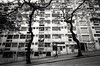 ...lover in a past life (David Davidoff) Tags: people street life urbanprospects city oldbuilding tree pattern architecture 前世情人 lover daughter pastlife zeisscontaxrangefinder biogon21mmf45