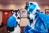 JustFurTheWeekend - March-30-2018-2114'50-IMG_6670 (SGT.Tibbs) Tags: 30032018 bristolfilton convention furries furry furryculture fursuits hobby holidayinn justfurtheweekend lgbtqia people subculture