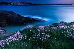 New Polzeath (Darrell Burgess) Tags: cornwall polzeath beach cliffs long exposure hitech filters wild flowers blue hour